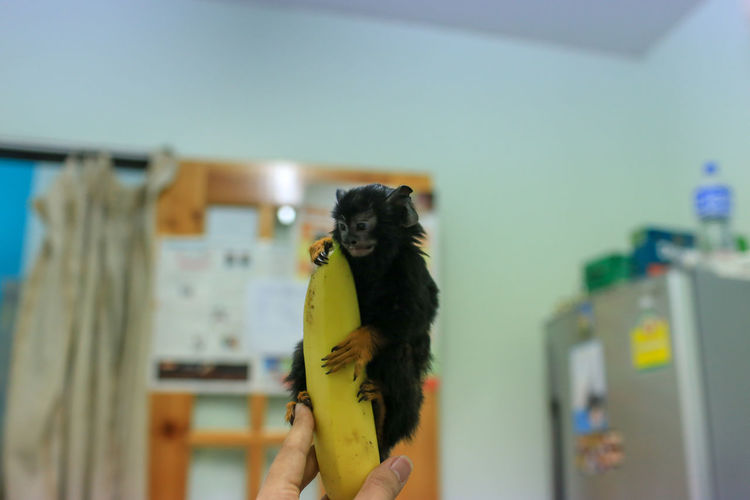 Cropped Hand Of Veterinarian Holding Infant With Banana In Hospital