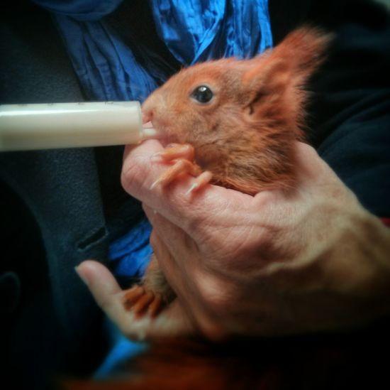Fütterung von einer Gastmama. Schmeckt trotzdem. :-) | Nexus4 Eichhörnchen Rheydt Erny Futter