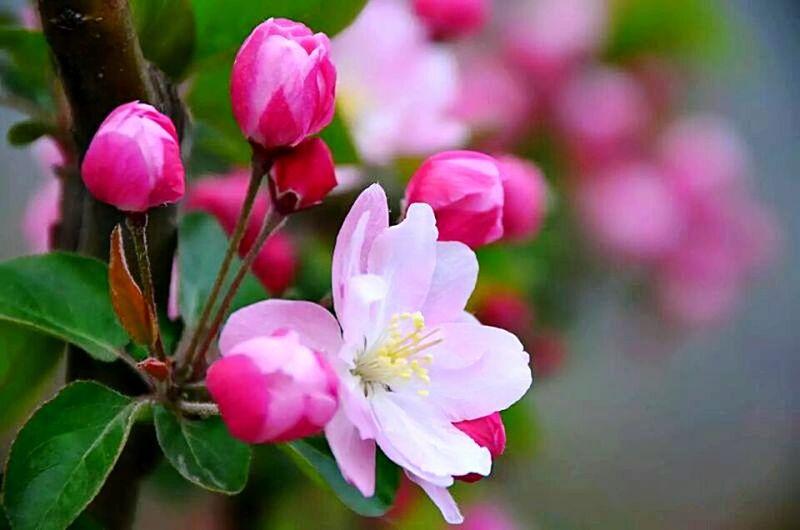 Beautiful flowers,yinchuan China.