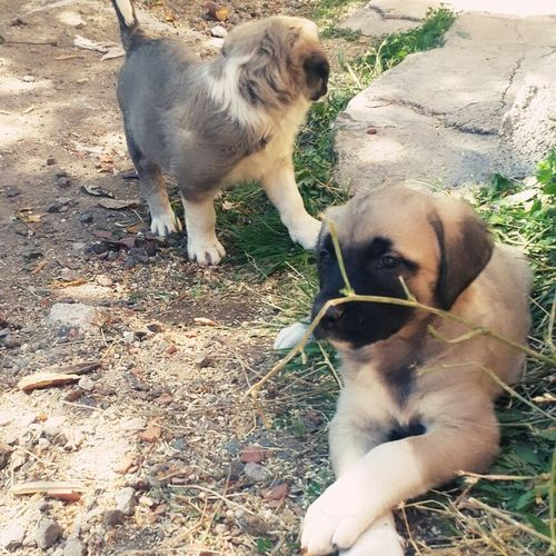 Luna And Nana My Pretty Dogs 😄 🐶 Tatlı Bıdıklar ım 😄😄