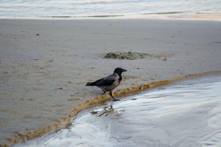 Bird perching on a beach