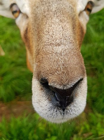 One Animal Grass Animal Animal Wildlife Animal Body Part Animals In The Wild Looking At Camera Mammal Close-up Green Color Outdoors Portrait Nature Grazing No People Day Animal Themes Beauty In Nature Pet Portraits