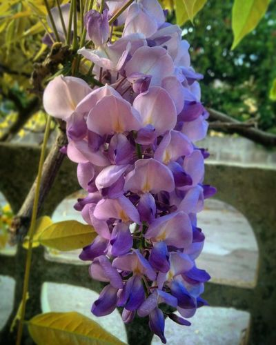 Purple Flower Fragility Petal Nature Beauty In Nature No People Plant Flower Head Close-up Growth Day Outdoors Orchid Freshness