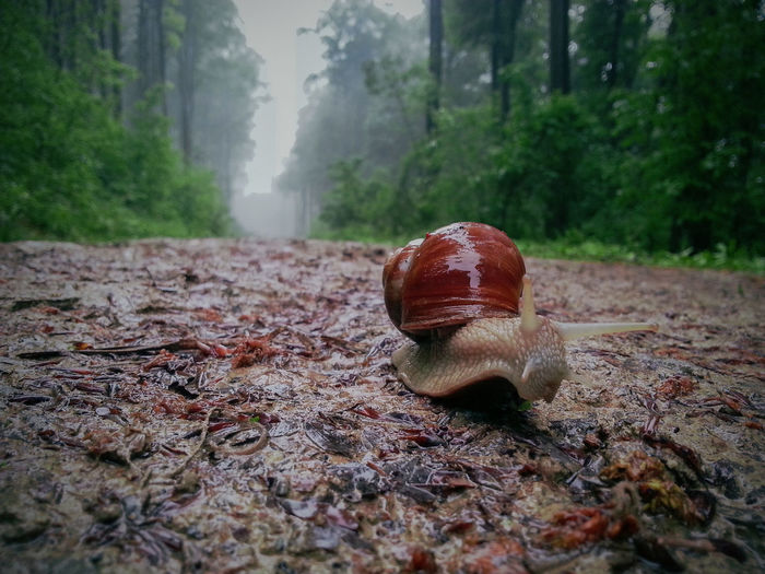 Close-up of snail on field amidst trees in forest