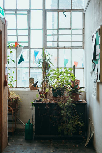 Travel Travel Photography Animal Animal Themes Architecture Day Domestic Room Flower Pot Glass - Material Green Color Growth Home Interior House Houseplant Indoors  Nature No People One Animal Plant Potted Plant Transparent Vertebrate Window