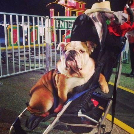 Hola!!! Mi nombre es Peter.. 😊 soy inofensivoo y No me toquen ando chido!!📷🐕 Peter Dog Smile Good Summer Canadiandog Legal Baby Consentido