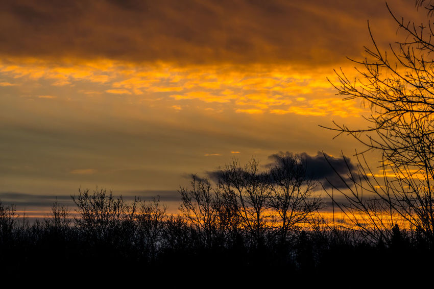 Beauty In Nature Cloud Clouds Clouds & Sky Clouds And Sky End Of Day Golden Golden Hour Night Fall Reflections Showcase April Silhouette Silhouettes Silhouettes Of Trees Sky And Clouds Skyporn Sundown Sunset Sunset And Clouds  Sunset Silhouettes Sunset_collection Sunsetporn Sunsets The Week On EyeEm Trees And Sky 43 Golden Moments