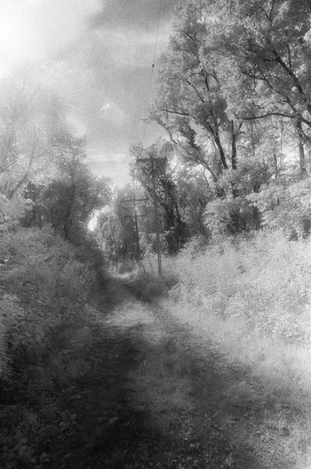 Analogue Photography Beauty In Nature Cloud - Sky Day Full Frame Infrared Infrared Photography Majestic Nature No People Non-urban Scene Outdoors Rural America Rural Scene Rural Scenes Scenics Sky Tranquil Scene Tranquility Tree Trees