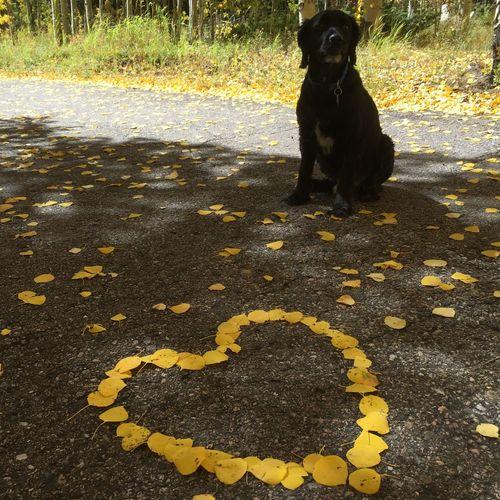 Fall Beauty Yellow Leaves Aspen Trees Aspen Leaves Heart Leaves I Love My Dog Favorite Season