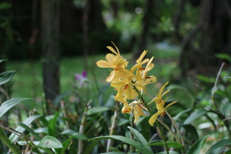 Botany Crocus