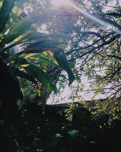 Vscocambr Vscoday Vscocam VSCO Vscogood VSCOPH Vscocambrasil Vscocambrazil VscoBr Vscobrazil Vscobrasil Vscodaily Vscocamflowers Vscoflowers Flowers Brasil