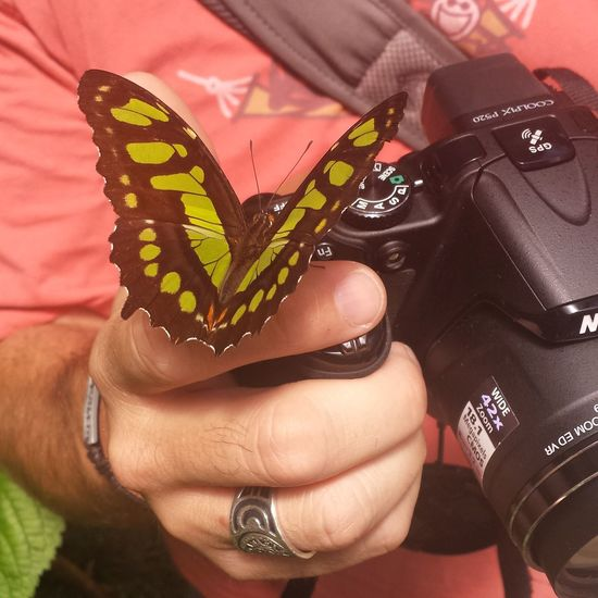 Taken with Samsung Galaxy S4 Costa Rica Butterfly Life Is Good