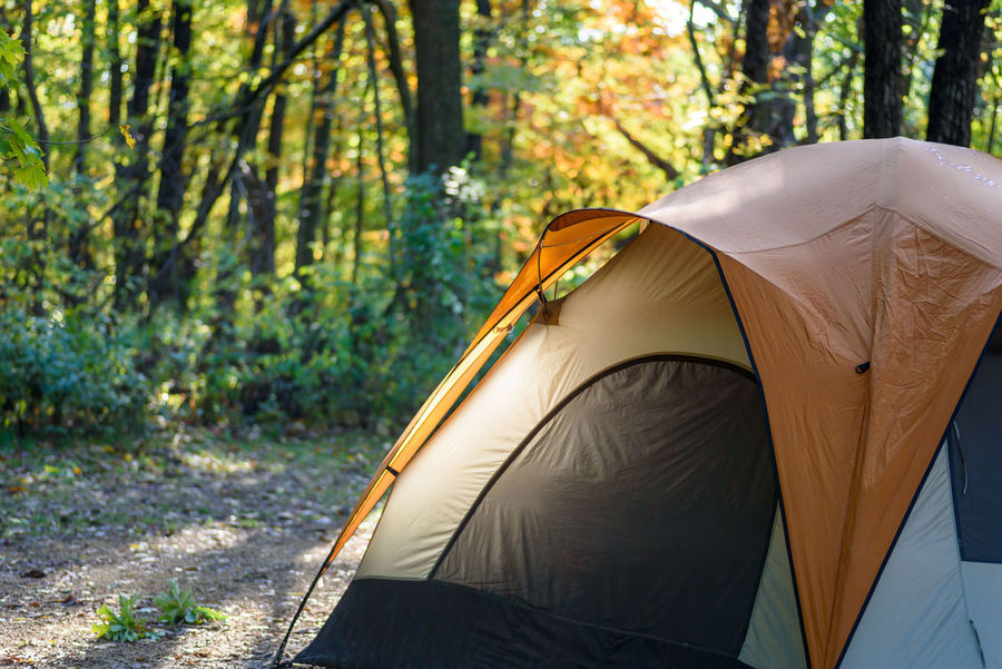 one tent on campsite in early morning sunlight with beautiful fall color Camping Camping Out Campsite Fall Colors Lifestyle Morning Light Sporting Goods Autumn Beauty In Nature Campground Camping Close-up Day Early Morning Forest Ground Illuminated Leaf Lifestyles Nature No People Outdoors Tent Tree Camp