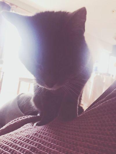 ✨❤️✨ Cat