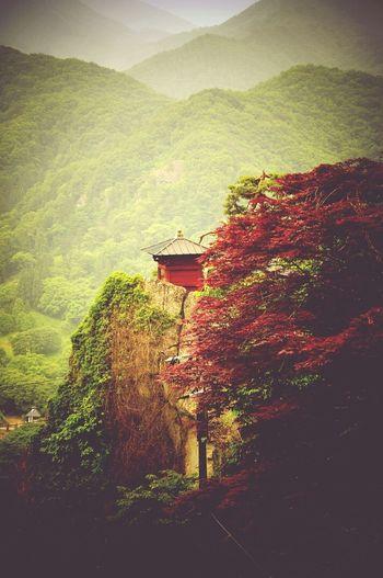 Cool Japan 山寺 Mount Temple Japan