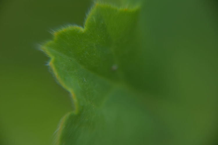 Backgrounds Backgrounds Details Textures And Shapes Beauty In Nature Close-up Day Fragility Freshness Green Color Growth Leaf Macro Photography Nature No People Outdoors Plant Selective Focus