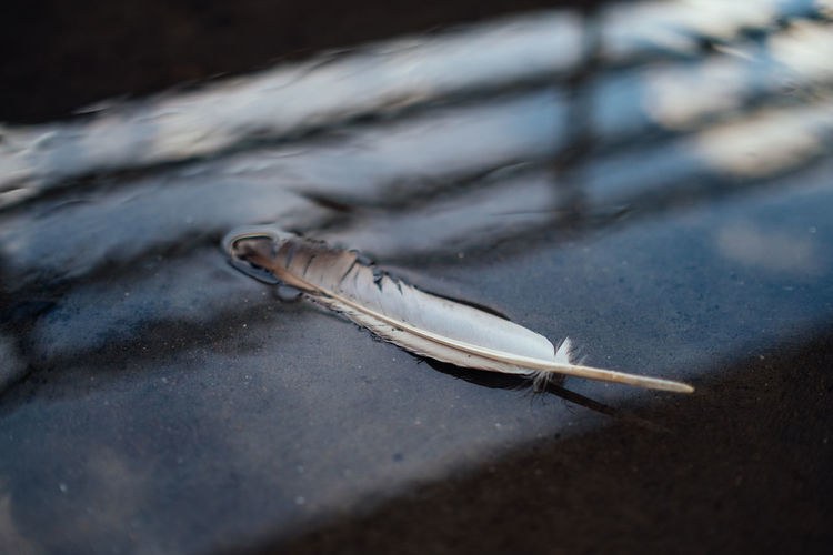Close-up of feather on the table