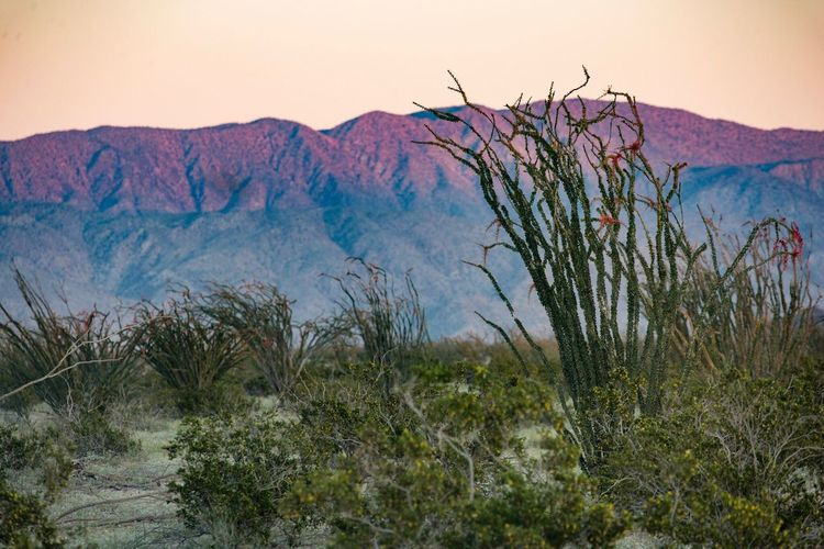 Scenics No People Nature Landscape Outdoors Sunset Mountain Nature Plant Ocotillo desert