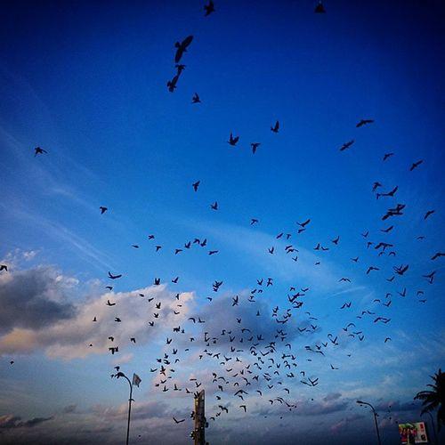 Varunulaa Raalhugandu Pigeons Sky sunrise cloud tsunami monument Maldives blue morning walk