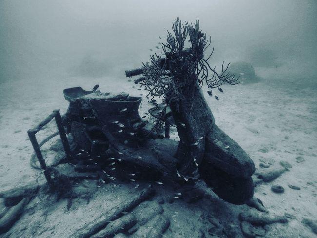India Goprooftheday Underwater Oceaninspiration Waves, Ocean, Nature The Great Outdoors - 2016 EyeEm Awards The Photojournalist - 2016 EyeEm Awards Protecting Where We Play Oceanart Oceanlifestyle