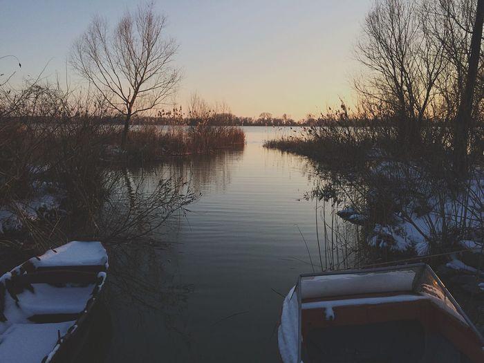 Tree Vilkovo Danube Nature River Wooden Boat Landscape