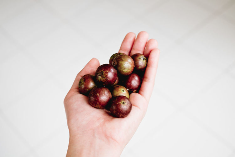 Kalumpit (Terminalia edulis BLANCO) / cherry Personal Perspective Ko Food Food And Drink Human Body Part Healthy Eating Fruit Human Hand Wellbeing Hand Holding One Person Freshness Close-up Body Part High Angle View Directly Above White Background Finger Human Limb Kalumpit Cherry Backgrounds Giving Raw Lifestyles Seriales Holiday Moments A New Perspective On Life Human Connection Moments Of Happiness Streetwise Photography