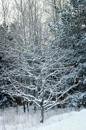 Winter Forest Snow Covered Branch Cold Winter ❄⛄ Winter Season Wintertime Winter 2016 Winter Winter Day Snowy Winter_collection January Showcase: January Nature_collection Snowy Trees Winter Trees