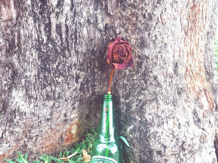 photography with dead roses Dead Rose Beer