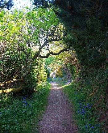 Flowery pathway tunnel Footpath Nature Landscape Outdoors Tree Plant Beauty In Nature Scenics No People Day Single Lane Road Rural Scene Grass Flowers, Nature And Beauty Springtime St Antony's Lighthouse Cornwall