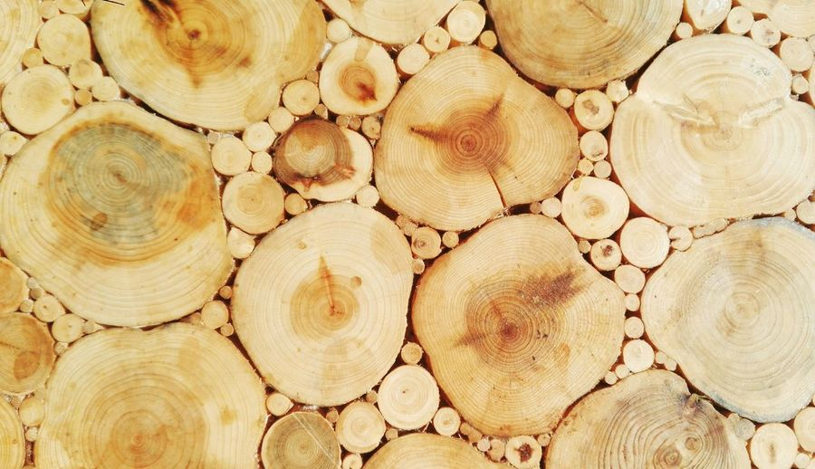 Tree Ring Backgrounds Concentric Stack Full Frame Cross Section Timber Wood - Material Textured  Pattern Deforestation Firewood Lumber Industry Bonfire Forestry Industry Fire Pit Campfire Wood Environmental Issues Fossil Fuel Axe Log Pile Tree Stump Cracked Woodpile Environmental Damage Visual Creativity Summer Exploratorium