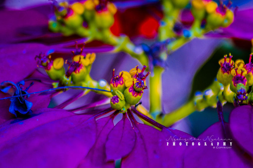 Plant Flowering Plant Flower Growth Beauty In Nature Freshness Close-up Nature Petal Purple