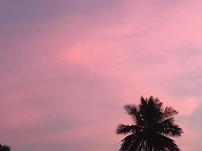 I'm a dreamer. I have to dream and reach for the stars, and if I miss a star then I grab a handful of clouds. Read more at: Iphonephotography Attitude ShotOnIphone Palm Tree Tree Beauty In Nature Sunset Sky No People Outdoors