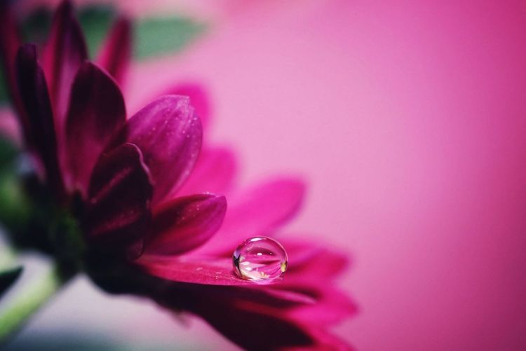 Flower and a