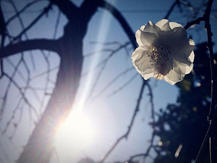 Low angle view of flower against sun