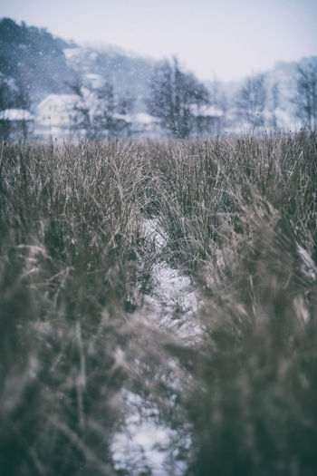 Outdoors Field Land Nature No People Tranquility Beauty In Nature Scenics - Nature Landscape Sweden Kungshamn Taking Photos Dogwalk Snowing Naturen Sverige Fujilove Fujifilm X-H1 XF56mmAPD EyeEm Nature Lover EyeEm Best Shots Outdoors Day Snow Sotenäs Fujifilm