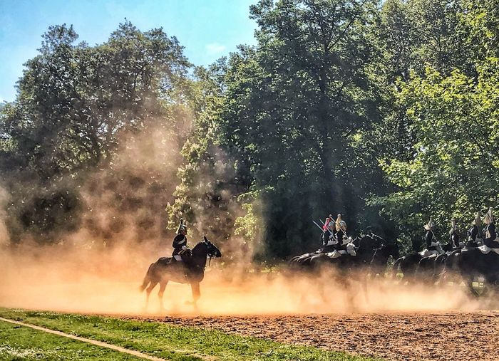 Kensington Gardens - Education - Training - Guards Royal Guards Kensington Gardens London Tree Plant Mammal Animal Themes Animal Domestic Animals The Great Outdoors - 2019 EyeEm Awards Animal Wildlife Nature Real People Horse Land Sky Field Day Livestock Growth Group Of Animals