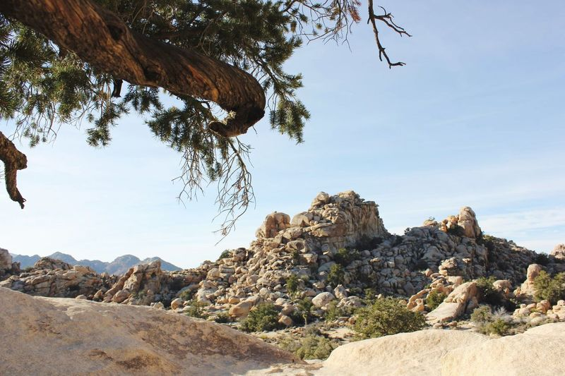 View of rock formations in joshua tree national park