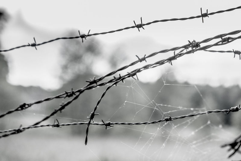 Close-up of barbed wires with spider web