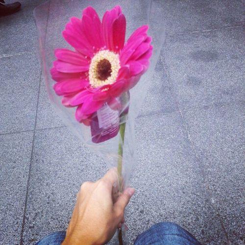 Pretty flower ^_^ Free Marychia