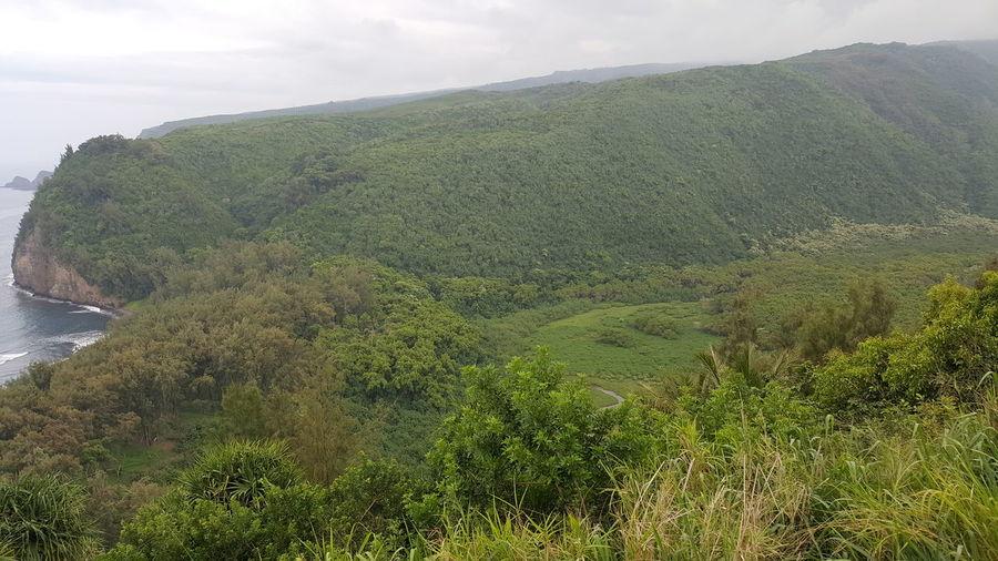 stunning view of Pololu valley Hawaii Hawaii Life Tea Crop Tree Water Rural Scene Sky Cloud - Sky
