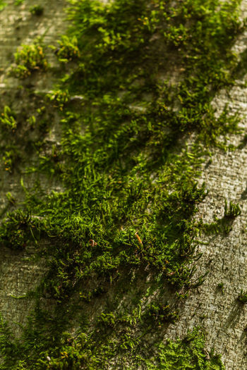 Beauty In Nature Close-up Day Freshness Green Color Growth Moss Nature No People Outdoors Plant Tree