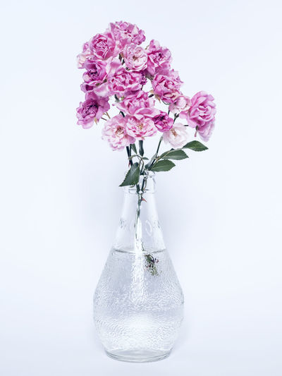 Close-up of pink flower in vase against white background