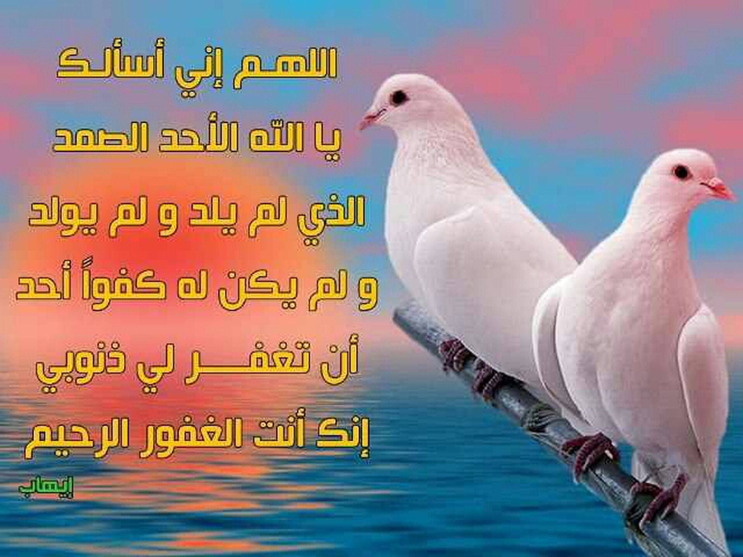 bird, animal themes, animals in the wild, wildlife, one animal, seagull, beak, text, focus on foreground, close-up, western script, perching, side view, water, communication, outdoors, day, nature, no people, full length