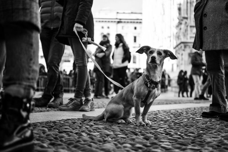 Black & White Mammal Domestic Domestic Animals Pets One Animal Vertebrate Real People Dog Canine Street Outdoors Day City