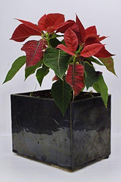 My wife's ceramics Ceramics D5500 Poinsettia Leaf Plant