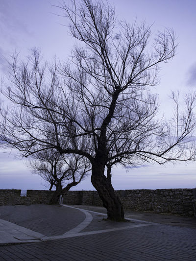 Bare tree by empty road against sky