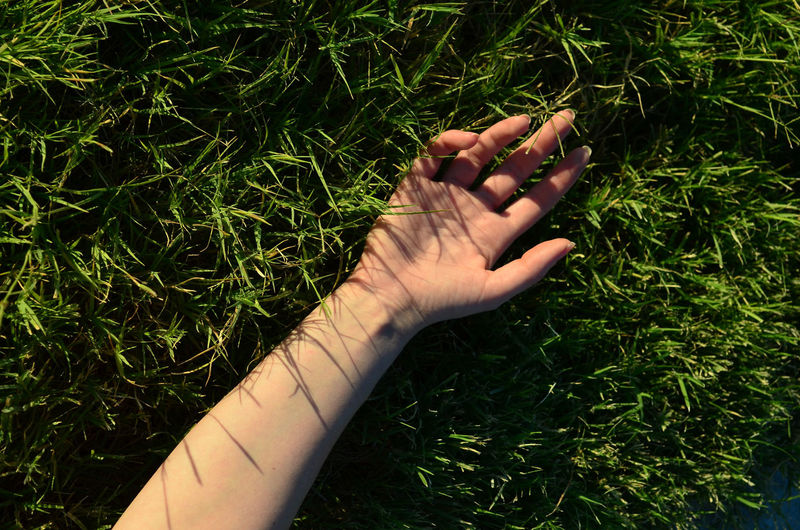 High angle view of woman hand on field