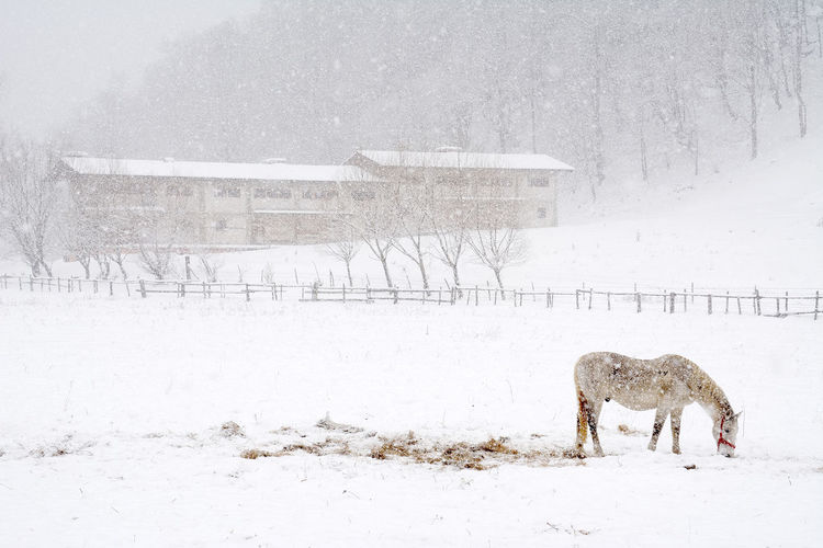 Horse on snow covered landscape