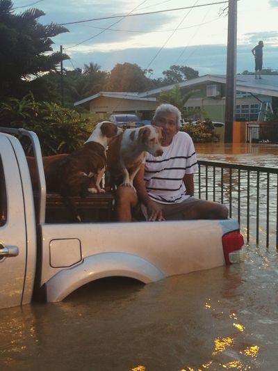 New Morning Morning Light Man On Rooftop Gate Flooded Flood Waters  Dogs Van Van Tray Man Pets Togetherness Friendship Sitting Tree Bonding Senior Adult Full Length