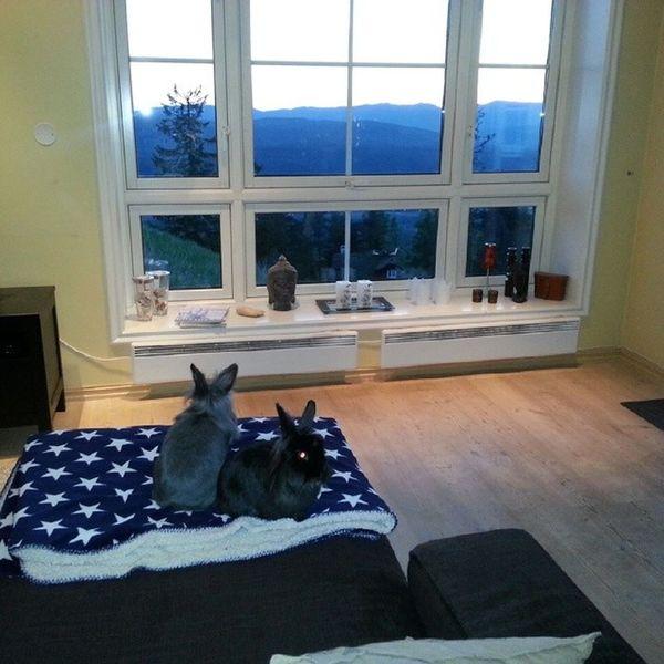 Tommy og Nusse slækker'n på sofaen og nyter utsikten i vårt nye hjem. Frittgående Bunnies Kaniner Rabbits bunny kanin rabbit